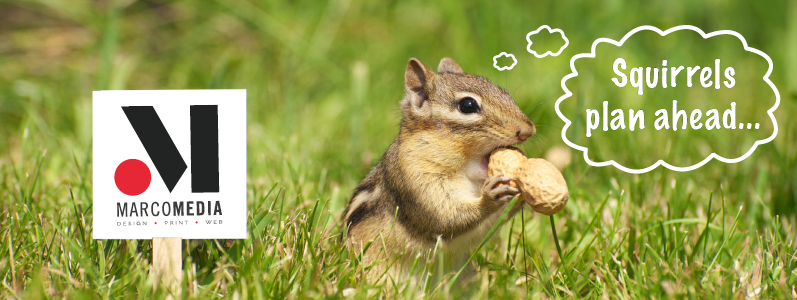 Why squirrels would rock at marketing (our nuttiest blog yet)